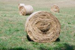 alberta baler fields lantlig sommartid för höliggandeprärie Fotografering för Bildbyråer