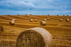 alberta baler fields lantlig sommartid för höliggandeprärie Arkivfoto