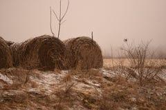 alberta baler fields lantlig sommartid f?r h?liggandepr?rie royaltyfri bild