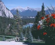 alberta banff bow Kanada River Valley Arkivbild