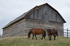 Alberta Barn Royalty Free Stock Photography