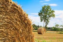 alberta beluje pola hay krajobrazu wiejskiego prerii lato Zdjęcia Royalty Free