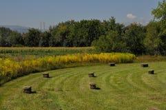 alberta beluje pola hay krajobrazu wiejskiego prerii lato Obrazy Royalty Free