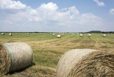 alberta beluje pola hay krajobrazu wiejskiego prerii lato Fotografia Stock