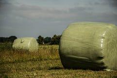 alberta beluje pola hay krajobrazu wiejskiego prerii lato Zdjęcie Stock