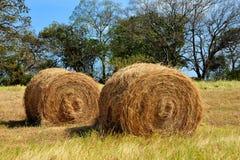 alberta beluje pola hay krajobrazu wiejskiego prerii lato Obrazy Stock