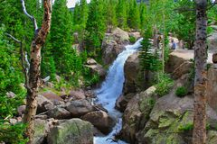 Alberta Falls i Rocky Mountain National Park royaltyfri bild