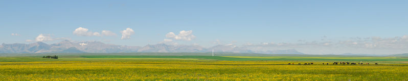 Alberta Farmland. Farm country in the foothills of the rocky mountains, Alberta Canada Stock Photography