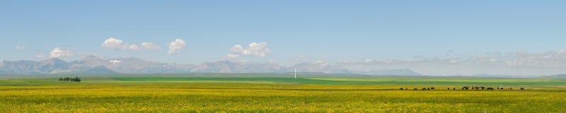 Alberta Farmland Stock Photography