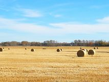 Hay bales. Alberta hay bales, large circle bales, fall time, farm and agriculture, nature, outside stock image
