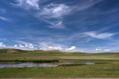 Alberta landscape Royalty Free Stock Image