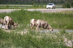 Alberta Roadways Photo stock