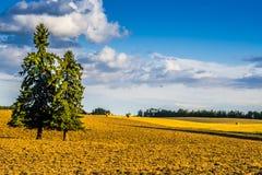 Alberta Rural Landscape - jordbruks- fält Royaltyfri Fotografi