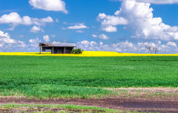 Alberta Rural landscape with an old shed Royalty Free Stock Image