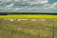 Alberta's Rural Landscape Royalty Free Stock Photo