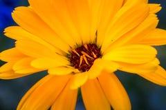 Alberta Wildflower Photos stock