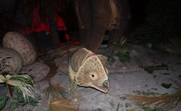 Albertaceratops恐龙与实物大小一样的模型在dinotopia泰国帕克的 免版税库存图片
