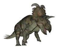 Albertaceratops dinosaur - 3D render. Albertaceratops dinosaur roaring isolated in white background - 3D render vector illustration