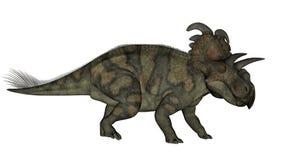 Albertaceratops dinosaur - 3D render. Albertaceratops dinosaur walking isolated in white background - 3D render stock illustration