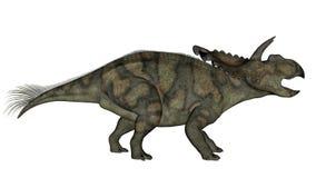 Albertaceratops dinosaur - 3D render. Albertaceratops dinosaur walking and roaring isolated in white background - 3D render stock illustration