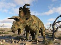 Albertaceratops dinosaur in the desert - 3D render. Albertaceratops dinosaur in the desert by day - 3D render royalty free illustration