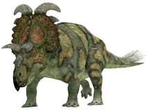 Albertaceratops over White Royalty Free Stock Image