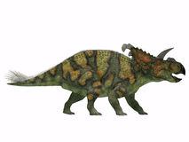 Albertaceratops on White. Albertaceratops was a member of ceratopsian dinosaur from the Upper Cretaceous Era Stock Photos