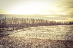 Albertas skönhet Royaltyfri Bild