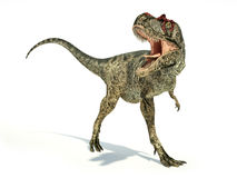 Albertosaurus Dinosaur, photorealistic representation, dynamic p Stock Photos
