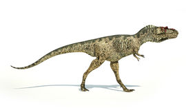 Albertosaurus Dinosaur, photorealistic representation, side view. Albertosaurus Dinosaur, photorealistic and scientifically correct representation, side view. On Royalty Free Stock Images