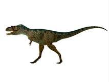 Albertosaurus Dinosaur Side Profile Stock Image