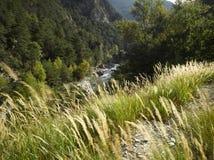 Albes-De-Haute-Provence; La vallee de la Blanche Lizenzfreies Stockbild