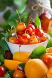 Albicocche e ciliegia Fotografia Stock