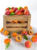 Albicocche fresche sulla tabella di legno fotografia stock