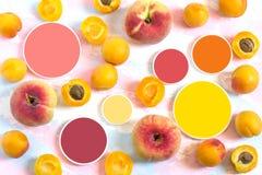 Albicocche mature, pesche piane e campioni di colore Immagine Stock