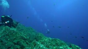 Albimarginatus för Silvertip hajCarcharhinus och undervattens- fotograf i den Sanbenedicto ön från den Revillagigedo skärgården stock video