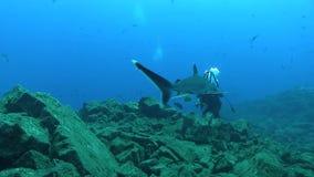 Albimarginatus van Carcharhinus van de Silvertiphaai en onderwaterfotograaf in Sanbenedicto-eiland van Revillagigedo-Archipel stock footage