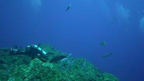 Albimarginatus van Carcharhinus van de Silvertiphaai en onderwaterfotograaf in Sanbenedicto-eiland van Revillagigedo-Archipel stock videobeelden