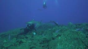 Albimarginatus van Carcharhinus van de Silvertiphaai en onderwaterfotograaf in Sanbenedicto-eiland van Revillagigedo-Archipel stock video