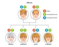albinism lizenzfreie abbildung