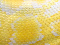 albino φίδι δερμάτων προτύπων στοκ εικόνα με δικαίωμα ελεύθερης χρήσης