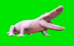 Albino American-Alligator lokalisiert auf grünem Hintergrund Lizenzfreies Stockfoto