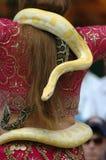 Albino-Birmane-Pythonschlange. Lizenzfreies Stockbild