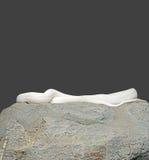 Albino Black Rat Snake Coiled en la roca en Gray Background, Cl Fotografía de archivo