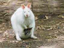 Albino mother, gray kid stock photos