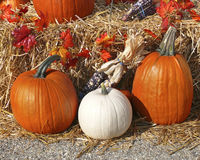 Albino pumpkin Royalty Free Stock Photos