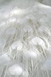 Albino White Peacock Feathers Royalty Free Stock Images