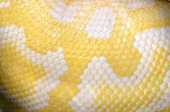 Albinopythonschlangeskala Lizenzfreie Stockbilder