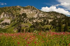 Albion Basin Landscape Royalty Free Stock Photography