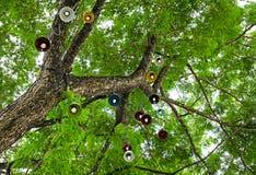 Albiza saman雨豆树 库存照片